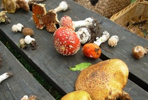 Mycologica / mushrooms, fungi, toadstools & fairy rings
