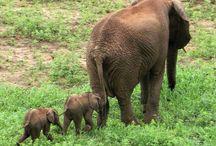 Elefanter <3