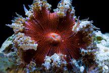 Flower Rock Anemone