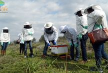 Become beekeeper for a day / Learn all the secrets of beekeeping and be astonished by the well-structured bee society. Visit a traditional honey production unit, and be wielded by the well-structured bee society.  Walk through beautiful flowered landscapes in order to meet and admire the magical world of the bees in their natural environment and finally taste unique Greek varieties of honey.
