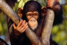 monos!!!! mis preferidos!!!!!!