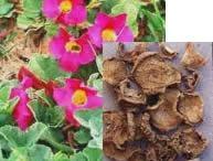 Top 10 Western Herbs / Learn more about these herbs in an 8 hour webinar www.soniamasoccoedu.com