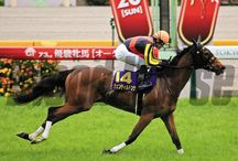 Gentildonna / Photos from the racing career of Japan's Champion mare Gentildonna. / by Blood-Horse