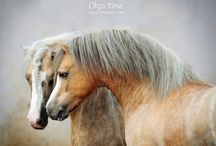 horses in the sun / by Sam Bertie
