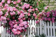 Gardens...Roses