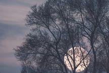 Moon / Möønlîght ✨