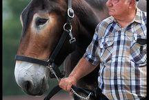 I love mules!:)