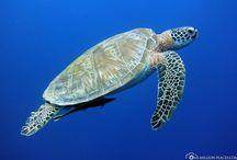 Reisen - Unterwasserwelten / Auf dieser Pinnwand pinne ich Pins mit schönen Unterwasserbildern.