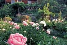 Kauniita puutarhoja