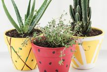 Vasos, suculentas , ideias para jardim