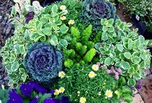 Garden and Landscape Ideas / by Michelle Hoffmann