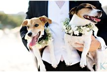 Weddings with your dog. / It's your big day but that doesn't mean your dog should miss out! Follow this board for ideas for your dog friendly wedding.