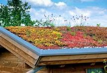 dachbeflanzung