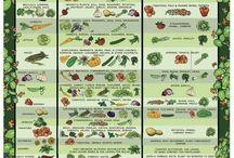 Veggies/companions.