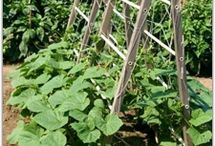 Garden Trellis / For Climbing Plants / by Jane Spivey