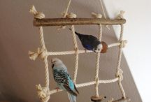 toys for parrots