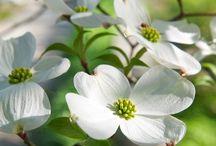 .λουλούδια