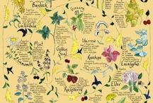 Herbs, Healing, Oils / by Sharon McMurren