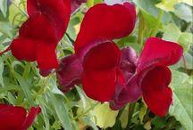 #piantefiori / Immagini di fiori e piante varie