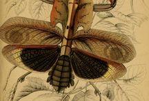 Natural History Illustration