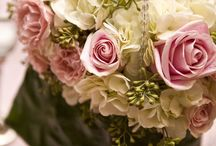 rosas e mais rosas. Antonia