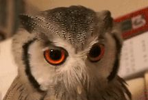 Gif owl and animal :-)