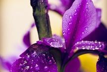 Flores & Jardines