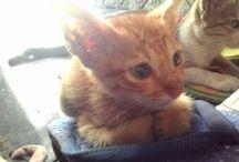 Cats / Klara's cat