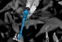 Dragon Fly / by Sam Nishoff