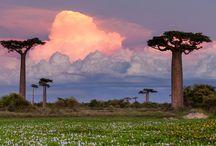 Africa / Viaggi da sogno in Africa Africa travels