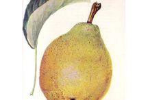 gyümölcsfák / Gyümölcsfáink