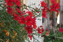 Posti da visitare in Italia / turismo in Italia...tourism in Italy