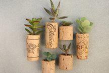 plantação / mini jardim, horta