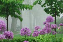Misty Moments