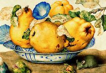 Fabulous fruit / by Debbie @ Confessions of a Plate Addict
