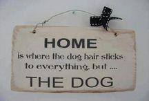 Inspiratives für Hundehalter
