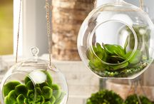 Indoor Plants / Plants aren't just meant to be outside!
