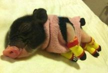 This Little Piggy Ran All the Way Home! / by Andrea Roeller
