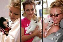 Mascotas de famosos que tienen una vida llena de lujos mejor que la muchas personas