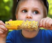 Intresting facts / facts and information about corn