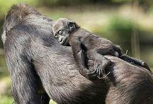 mammals nurturing