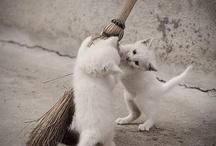 kitty, kitty, kitty!!!