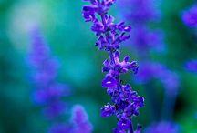 S -- Flower