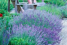 Idéias jardins