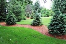 landsccaping/gardening