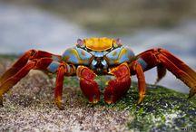 Art Ref - Crabs
