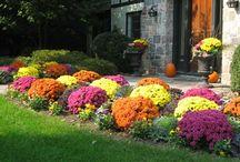 Fall flowers and plants / by Deb Wabnitz