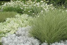 Planting textures / great planting combinations
