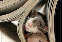 RATs / ulubione :)