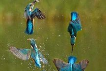 Birds uccelli